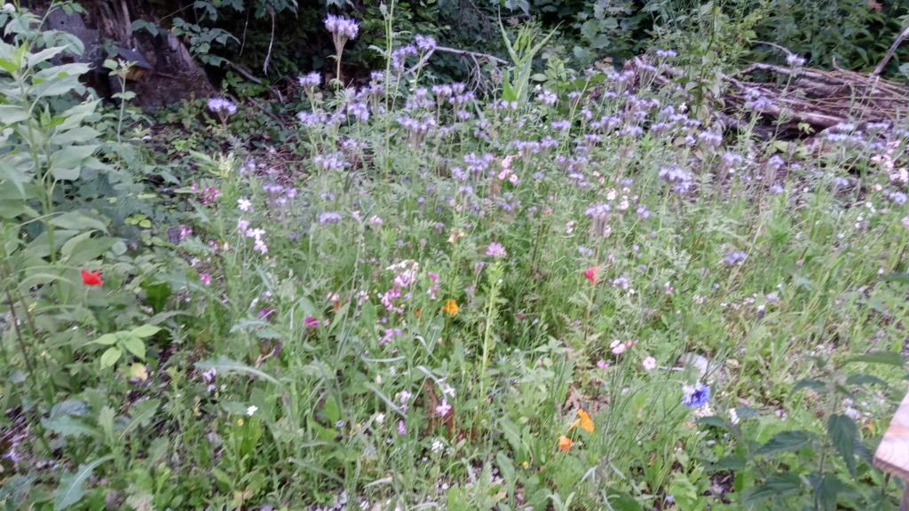 Wildblumen ( Sammelthread) - Seite 24 Img_2030