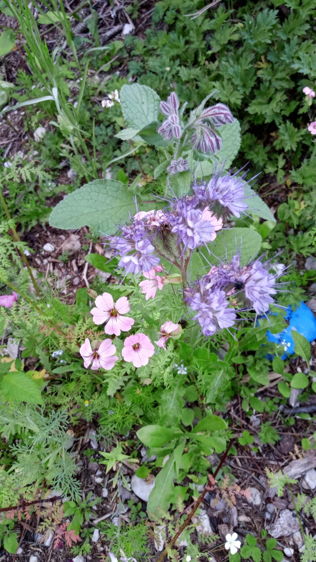 Wildblumen ( Sammelthread) - Seite 24 Img_2031