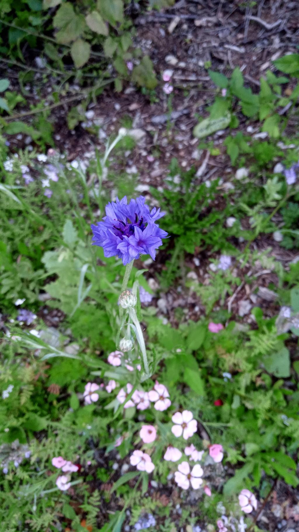 Wildblumen ( Sammelthread) - Seite 24 Img_2034