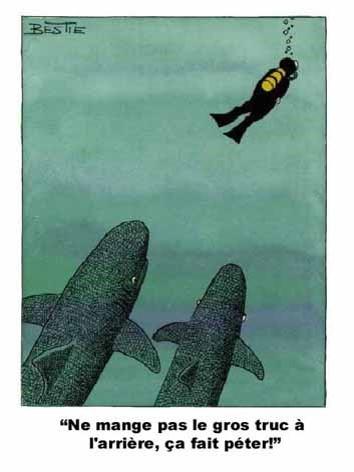 Pinasse d'Arcachon - Page 6 Requin10