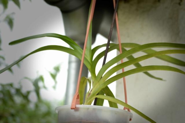Orchideen-Neuzugang 2 - Seite 29 Dsc_5712