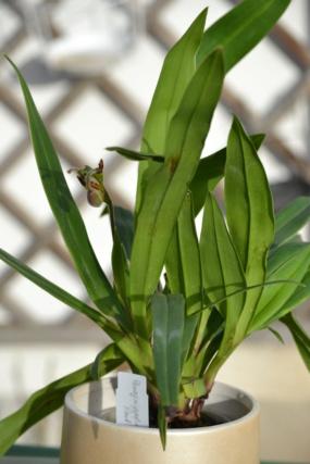 Orchideen-Neuzugang 2 - Seite 32 Dsc_6915