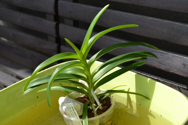 Orchideen-Neuzugang 2 - Seite 33 Dsc_8516