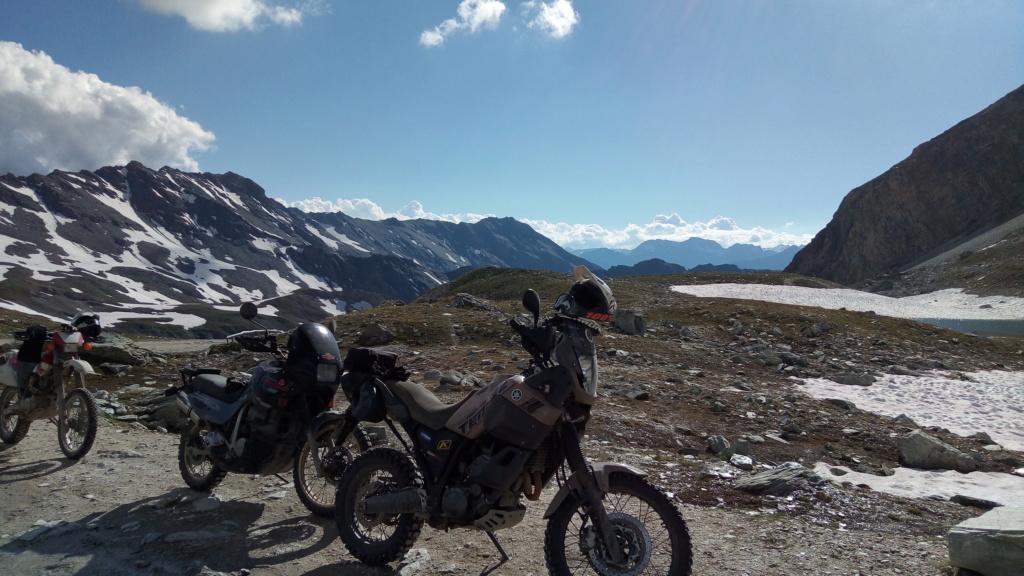 stella alpina 2018 P_201813