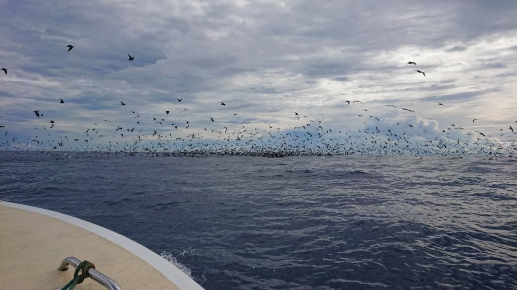 Wallis et Futuna .... nos eaux sont nettoyées ... Dsc_0110