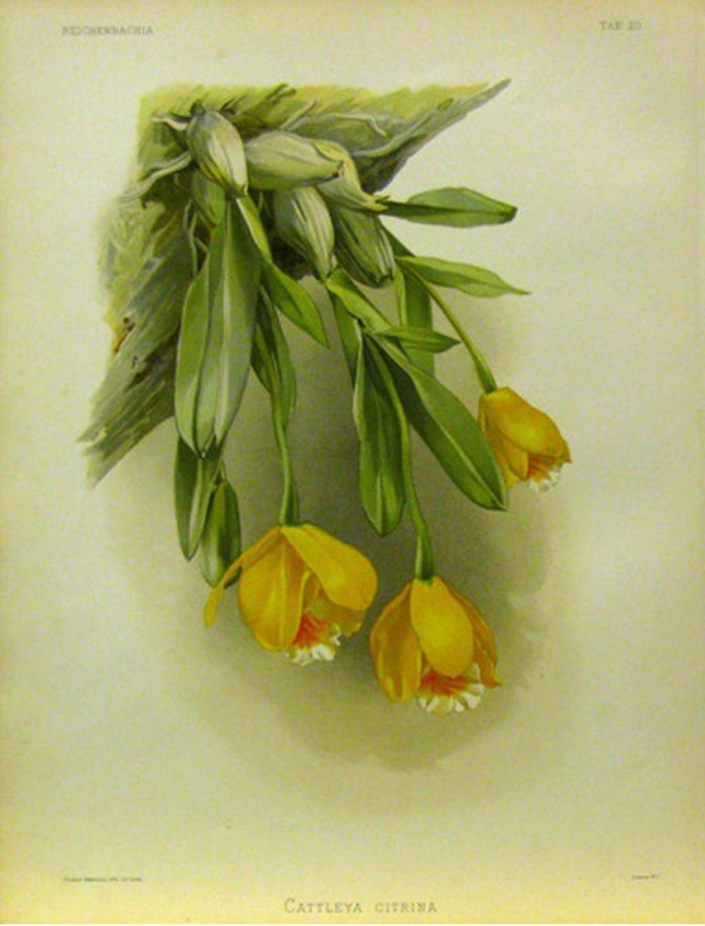 voici mes n'orchidée dans mon phytotron - Page 2 152