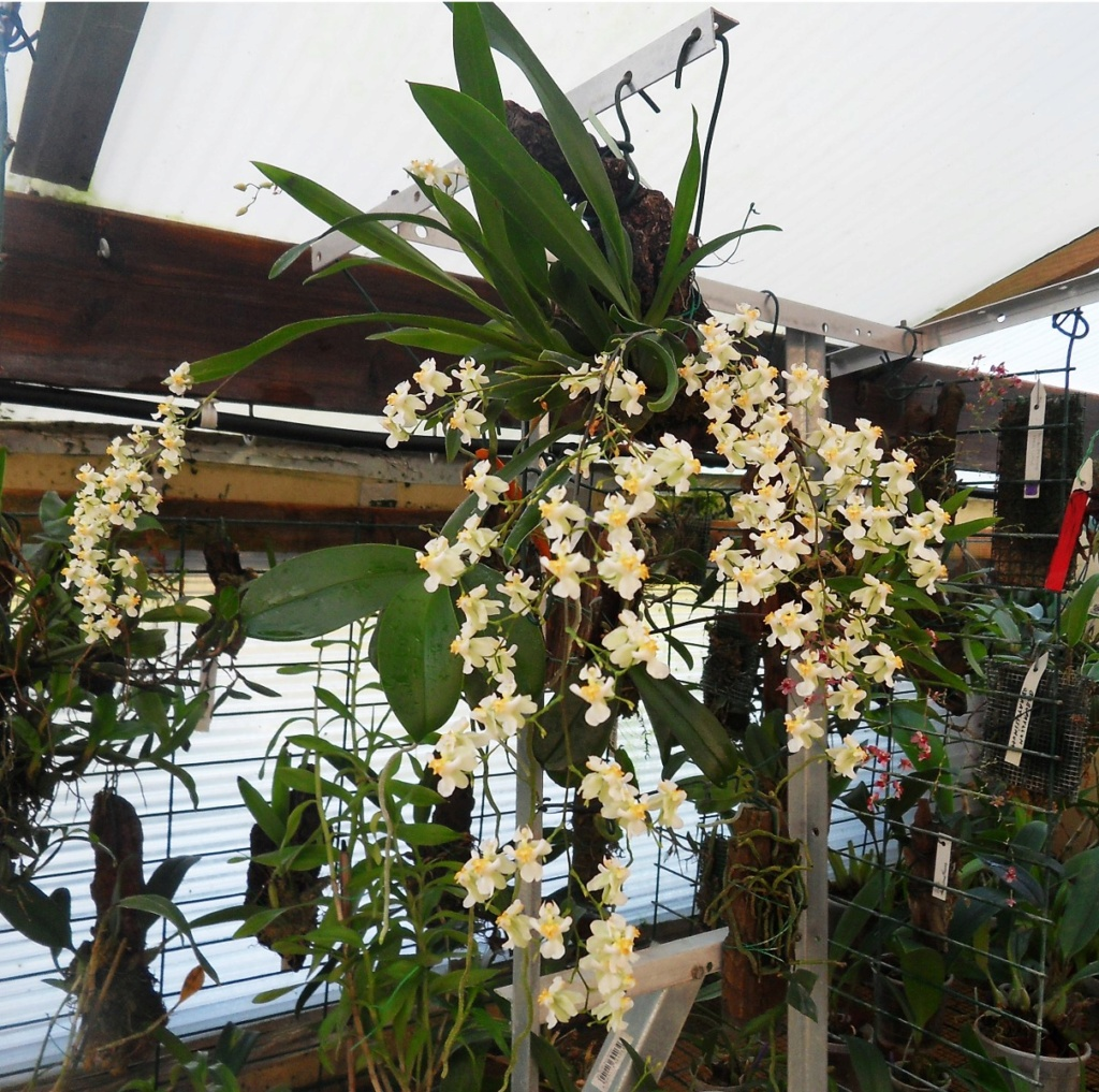 Bouquet blanc 164