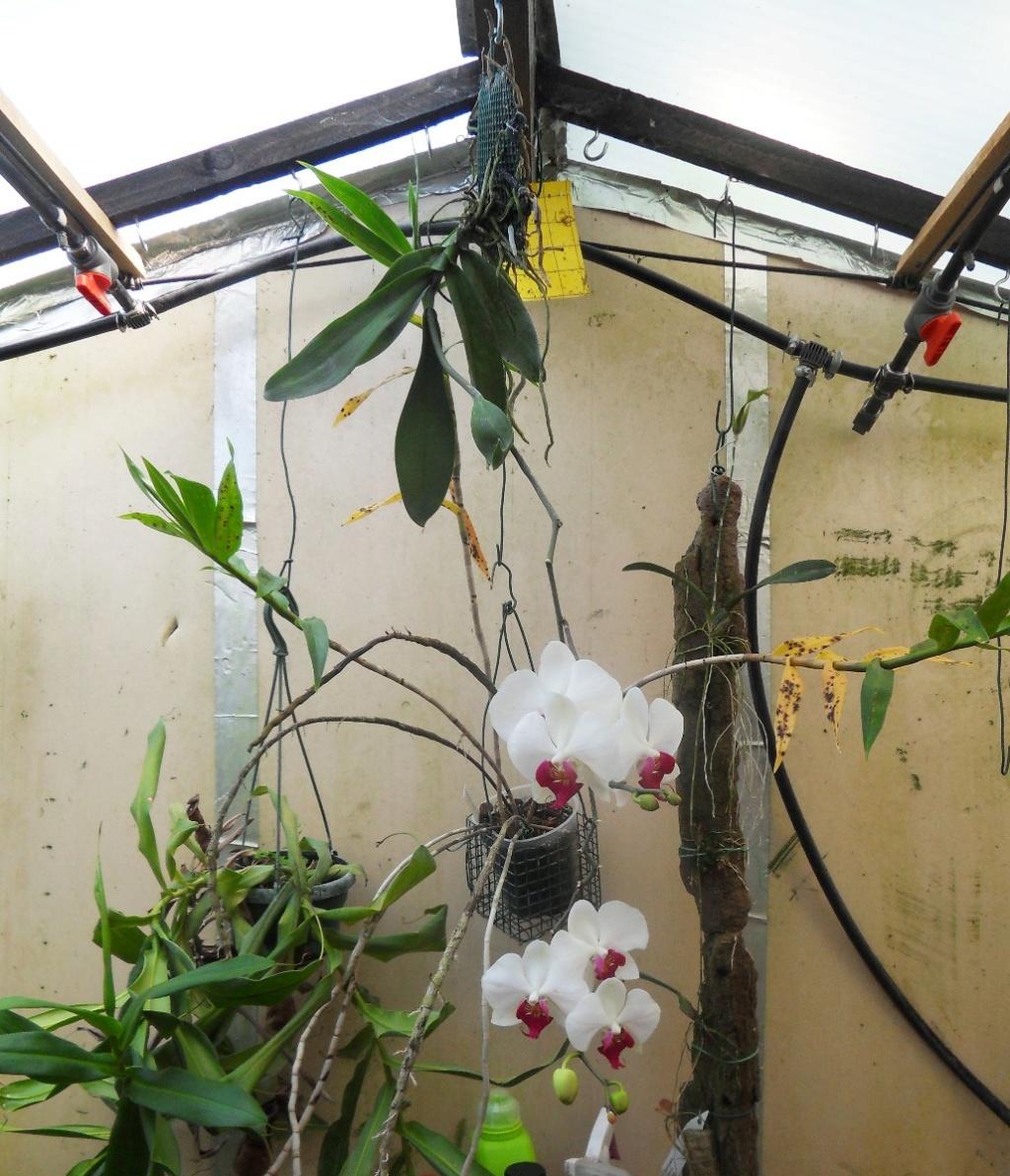 Floraison en cascade 3310