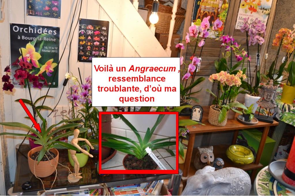 photos Angrae10
