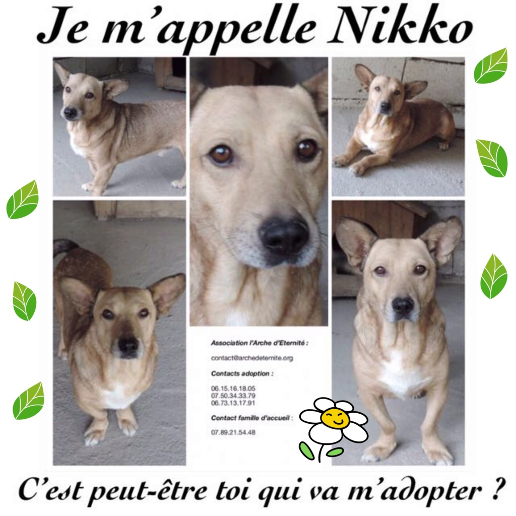 NIKKO, né en 2014 sauvé de l'équarrissage en décembre 2017-marrainée par Célia78 - R-SC-SOS 02a6d910