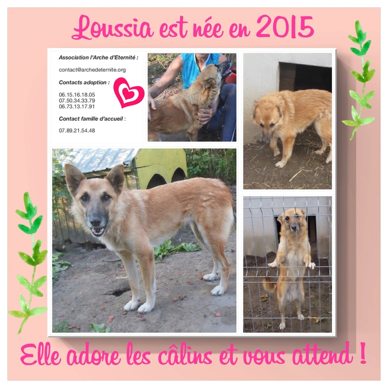 Loussia- femelle née le 11/03/2013 - 2 ans de refuge - X berger  en FA dans le 77- sauvée de l'équarrissage - Marrainée par Bonne-de-Loës - R-SC-SOS-30MA 1473c310