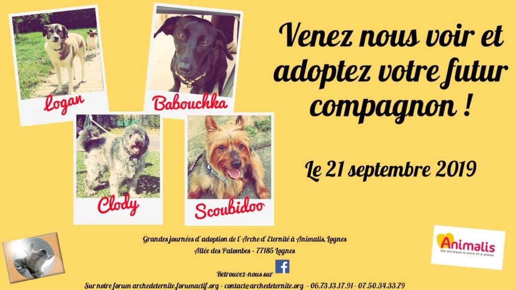 Journée adoption samedi 21 septembre 2019 Lognes 21_sep11