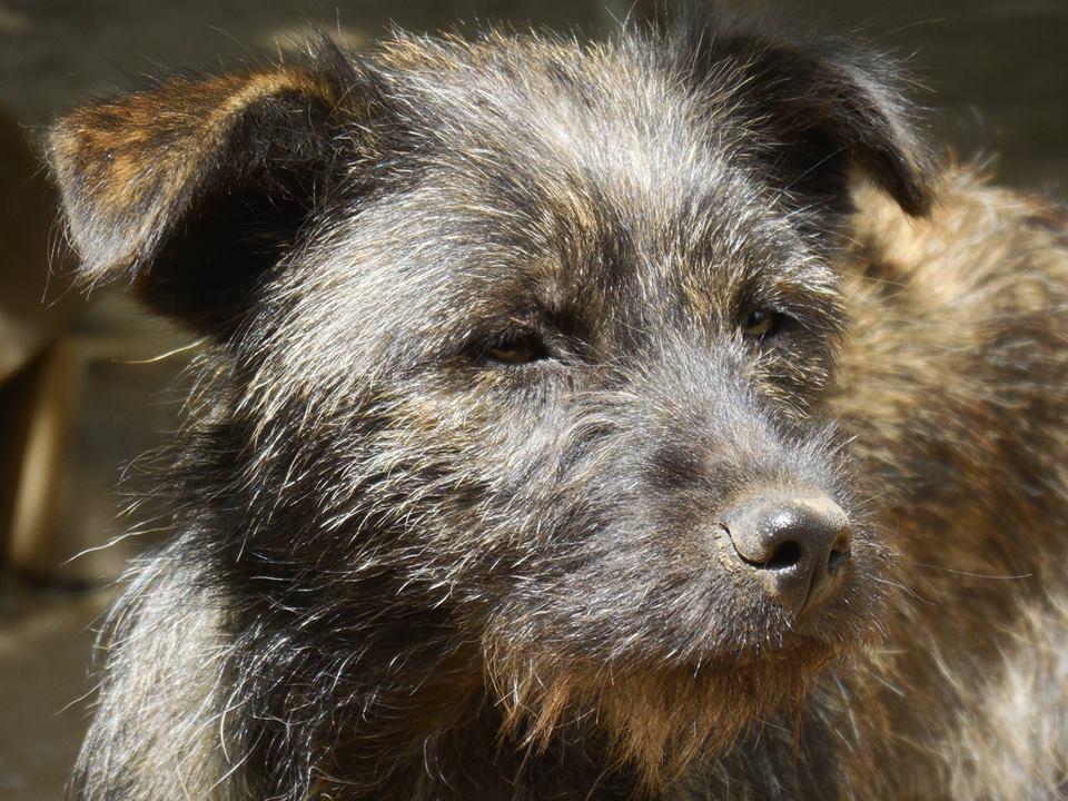 PATCH, femelle bringée née en Juillet 2017, trouvée dans un champ- Parrainée par Jumeca R-SC-SOS- 33216210