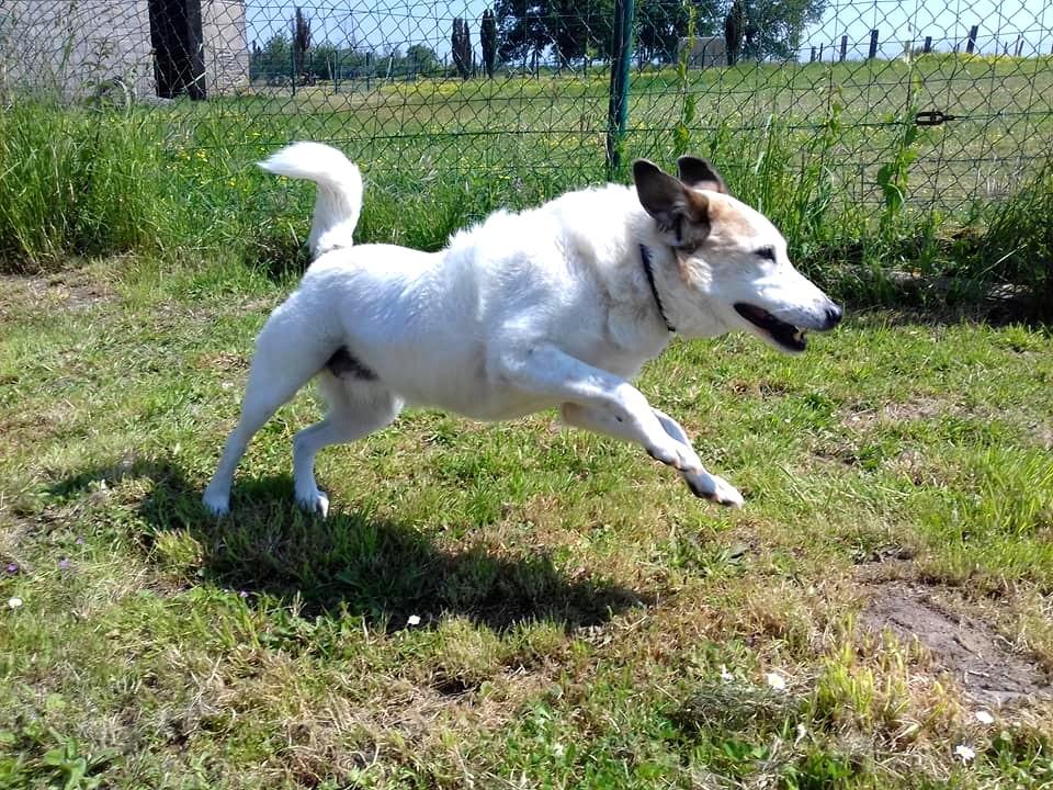 FATA, née le 12/06/2009, arrivée chiot au refuge (soeur de Mickey et fille de Tara) - en FA dans le 49 - GARANT - SOS -R-FB-SC-30MA 33383110