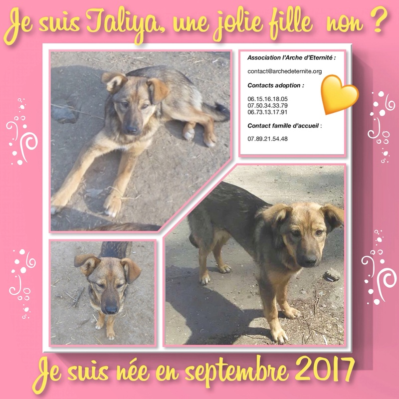 taliya - TALIYA -NEE LE 10/09/2017, soeur de Nami et Ouzo, trouvée dans le rue par Lenuta-(EN FA dept 42)- Marrainée par Karst -R-SOS-30MA 85407b10