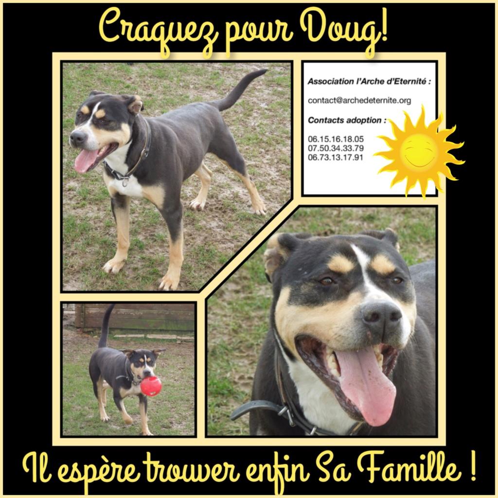 doug - ** EN PENSION ** DOUG, croisé berger/dogue, né en 2013 - parrainé par Reglisse, Bouffy, Bijoux972, Françoise H., Pirouette ... 8c448010
