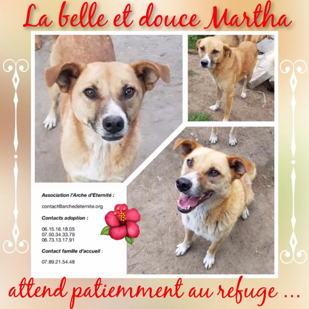 MARTHA - croisée berger née en 2013 - sauvée de l'équarrissage - parrainée par caroline78 - SOS-R-SC- Ab0b7f10