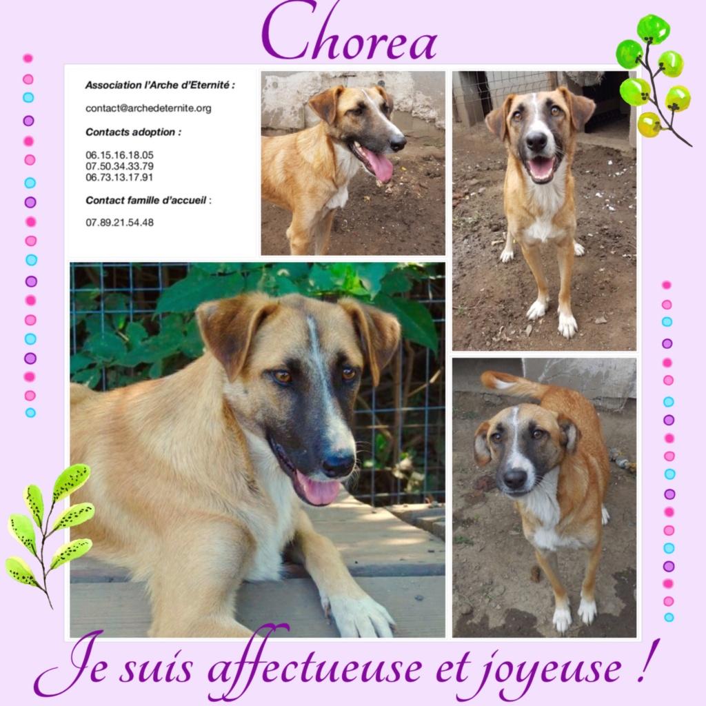 CHOREA, née en sept 2016 (chiot d'AKELA) - Famille sauvée par Lenuta dans un champ-parrainée par Mirko78-R-SOS-SC C687b210