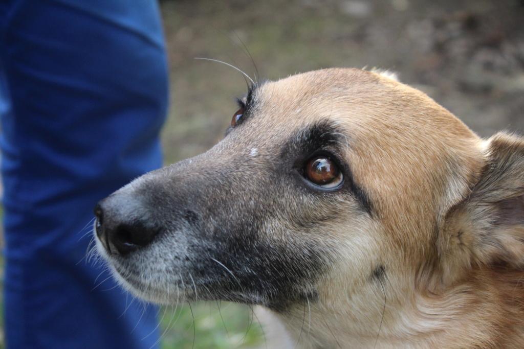 Loussia- femelle née le 11/03/2013 - 2 ans de refuge - X berger  en FA dans le 77- sauvée de l'équarrissage - Marrainée par Bonne-de-Loës - R-SC-SOS-30MA Img_5016