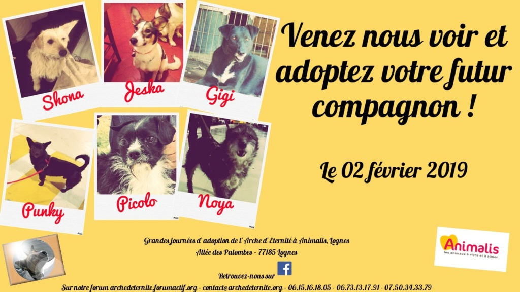 Journée adoption février 2019 Journz10
