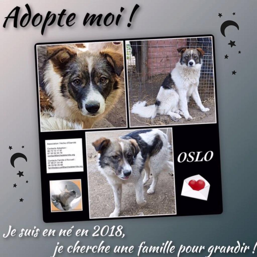 OSLO, Mâle né le 15/04/2018 ( chiot de Wally ) - parrainé par Caroline Louise -R-SOS-SC Oslo_210