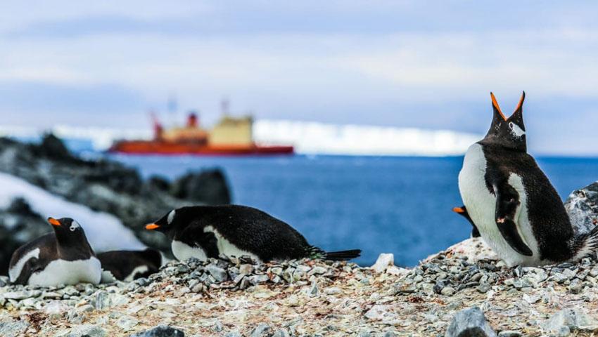 Campaña Antártica 2020/21 18-12-10