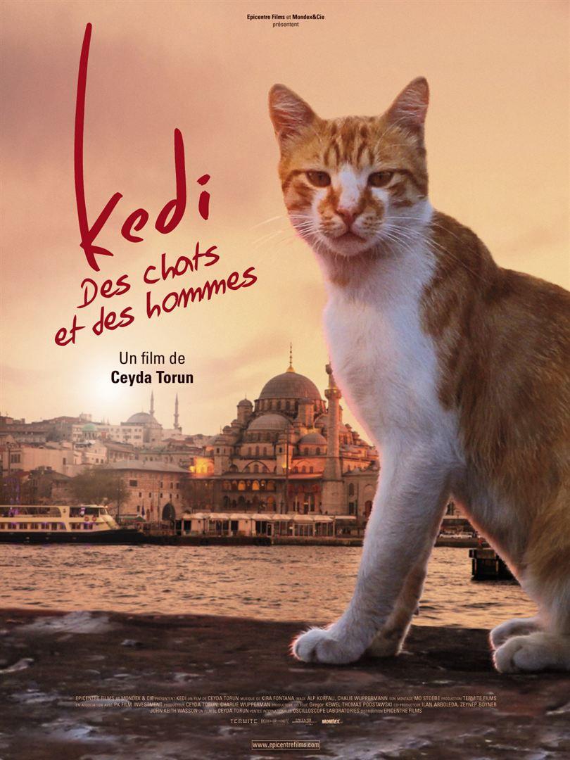 [Documentaire] Kedi, des chats et des Hommes Kedi_d11