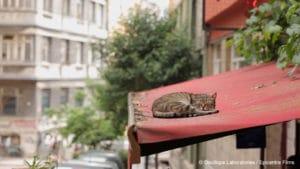 [Documentaire] Kedi, des chats et des Hommes Photo_11