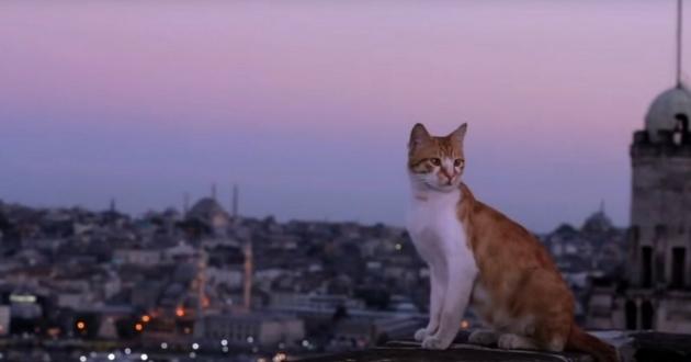 [Documentaire] Kedi, des chats et des Hommes Sans-t10