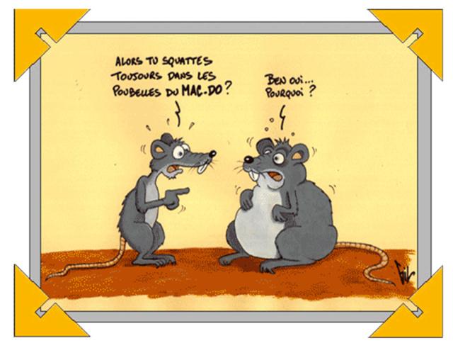 bonzour bonne zournée et bonne nuit notre ti nid za nous - Page 3 Rats10