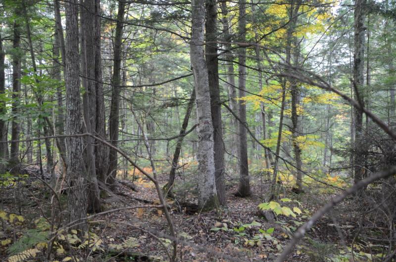 Zones et dates de chasse au Québec Dsc_1611
