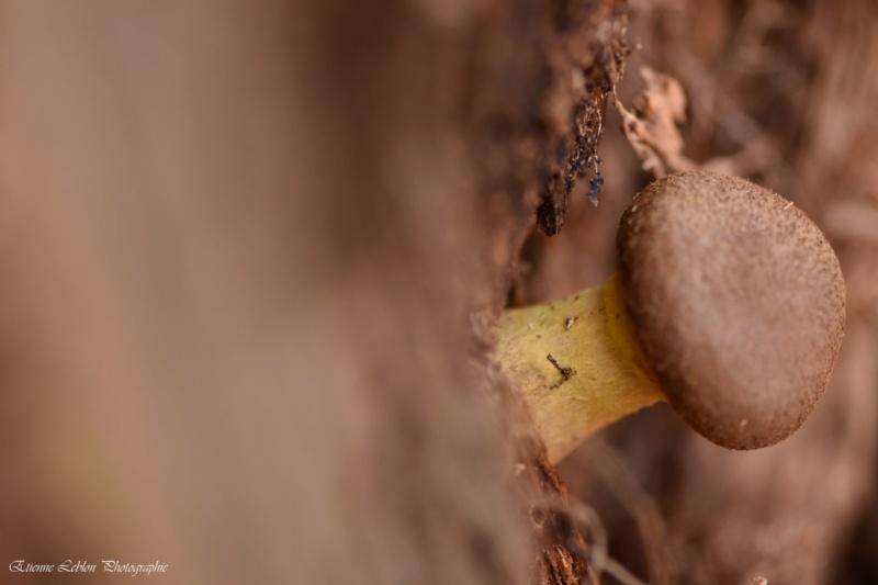 Reconnaître les champignons ! Dsc_4011
