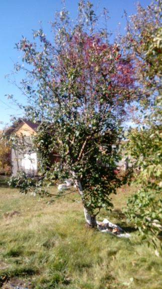 Расцветали яблони и груши... - Страница 39 20180910
