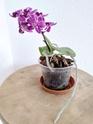 Unbekannte Orchideenart sieht krank aus Img_2011