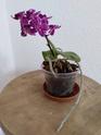 Unbekannte Orchideenart sieht krank aus Img_2013