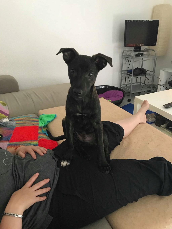 Cooky (ex-Newton) - mâle - Târgu Frumos - réservé adoption (67) 35077510