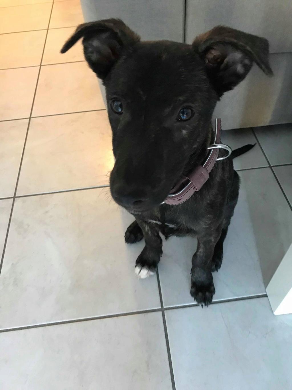 Cooky (ex-Newton) - mâle - Târgu Frumos - réservé adoption (67) 35077810