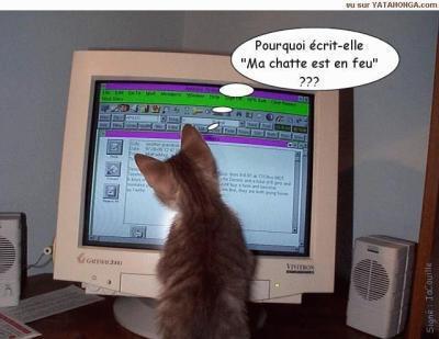 """Les chats de Matou""""_ 15512710"""