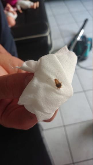 Quel est cet insecte ? Dsc_0112