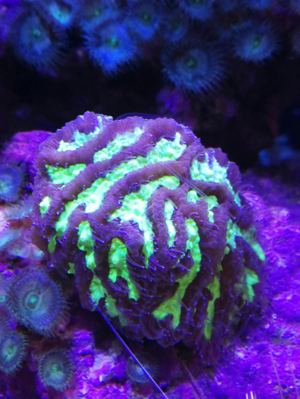 Supplementation seachem reef fusion 1 et 2  15859911