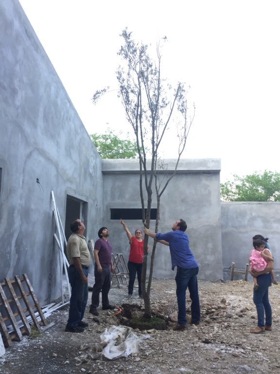 Consulta olivo ornamental (México) Img_7110