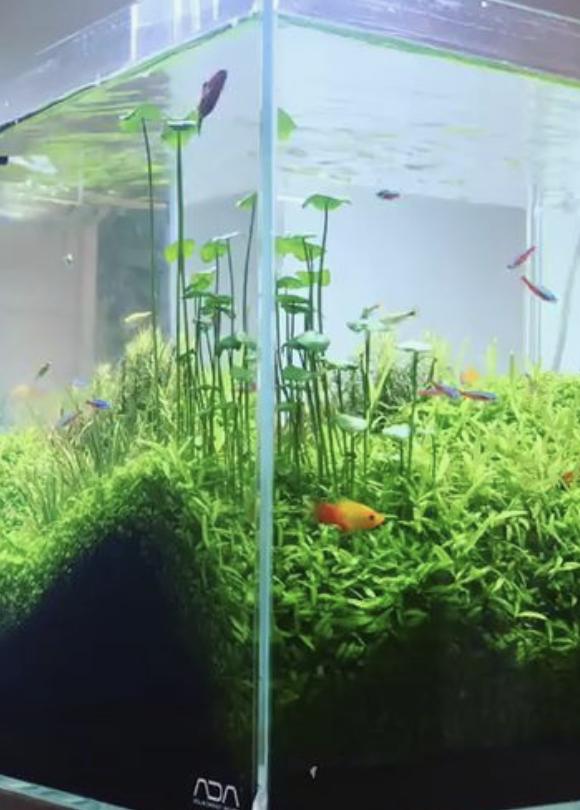 Lancement aquarium apocalyptique  100L Captur14