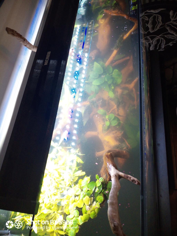 Lancement aquarium apocalyptique  100L Img_2011