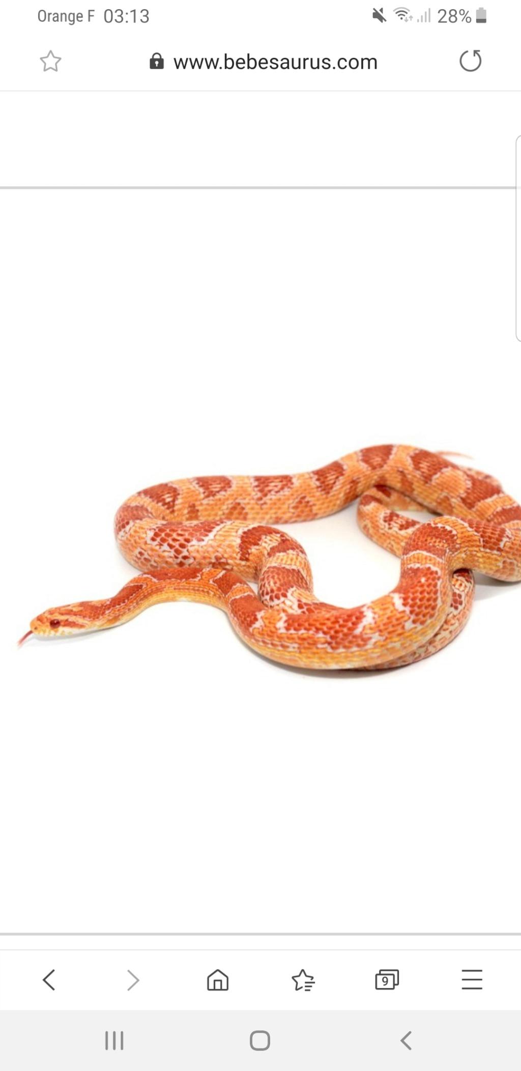Quel est ce serpent ?  Screen10