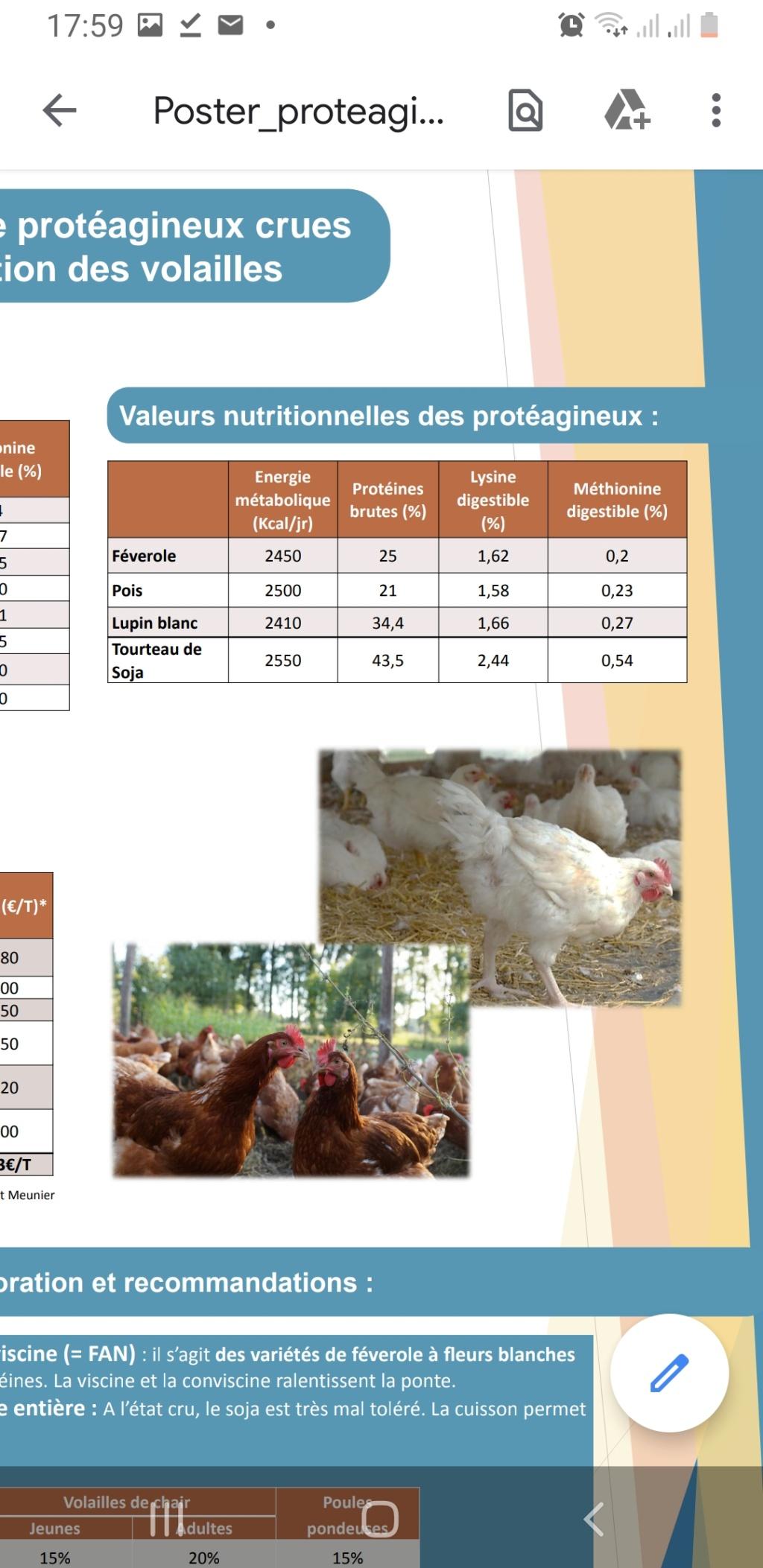 Alimentation pigeon pour poules/poulet Screen10