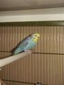 Présentation de mes ptits plumeaux Oiseau22