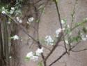 le printemps au jardin  Printe13