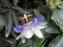 le printemps au jardin  Printe16