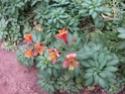 le printemps au jardin  Printe18