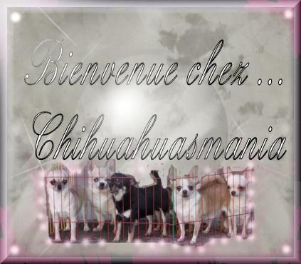 chihuahuasmania